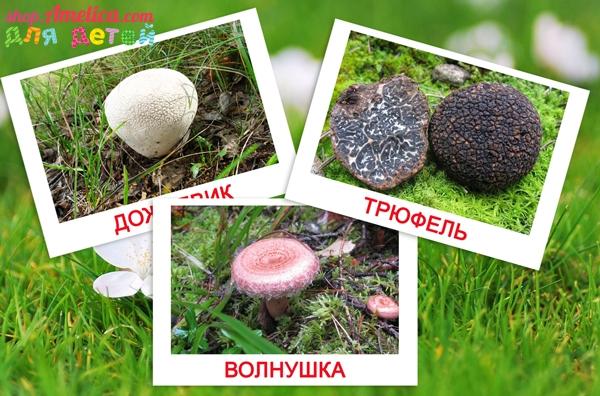 грибы картинки, карточки домана, методика домана, картинки грибы