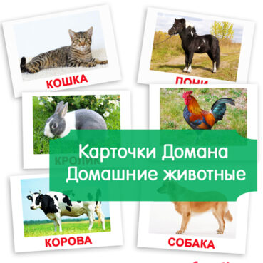 картинки домашние животные, картинки животные