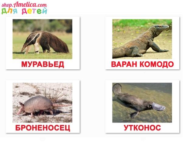 картинки экзотические животные, экзотические животные с названием,