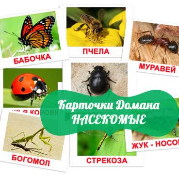 насекомые картинки, картинки насекомых для детей