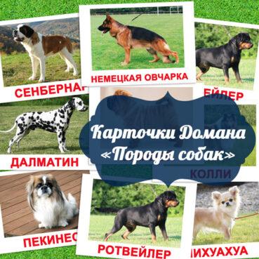 картинки породы собак для детей, карточки домана породы собак