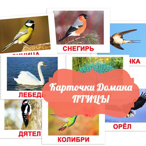 детские картинки птицы, птицы картинки для детского сада