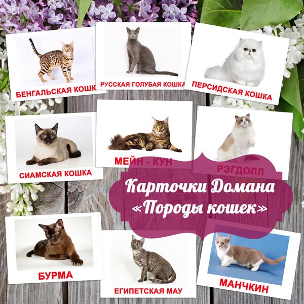 картинки породы кошек с названием для детей