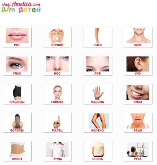 картинки части тела, карточки части тела