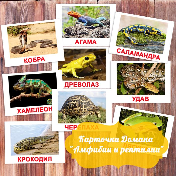 карточки Домана Амфибии и рептилии, карточки Домана скачать