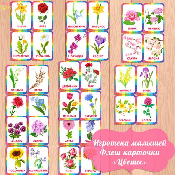 флеш карточки цветы, карточки цветы, карточки для малышей, изучаем цветы