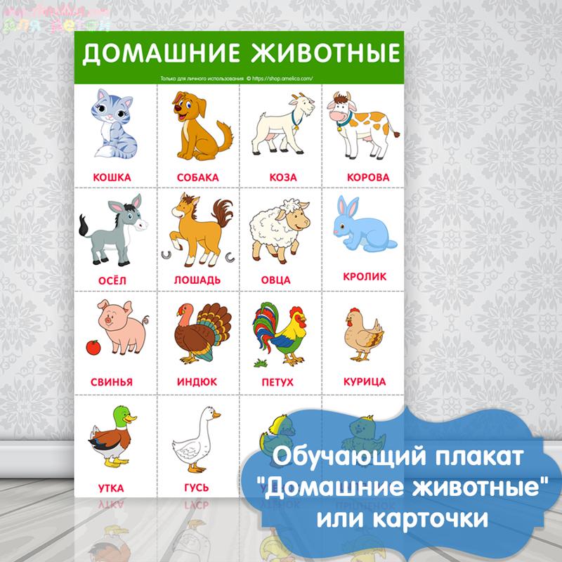Обучающий плакат, развивающий плакат для детей, плакат для детского сада, картинки домашние животные для детей