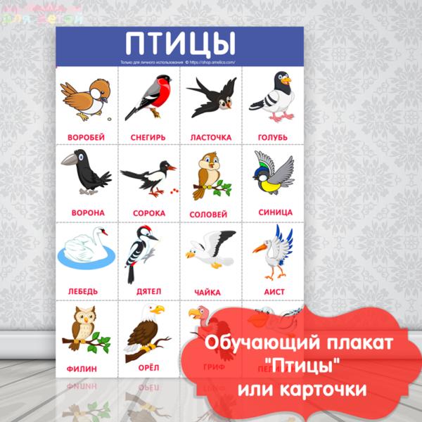 птицы картинки для детей с названием, плакат для детского сада