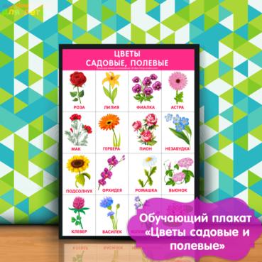 плакат для детского сада, картинки цветы садовые для детей, детские картинки цветы полевые, цветные картинки цветы