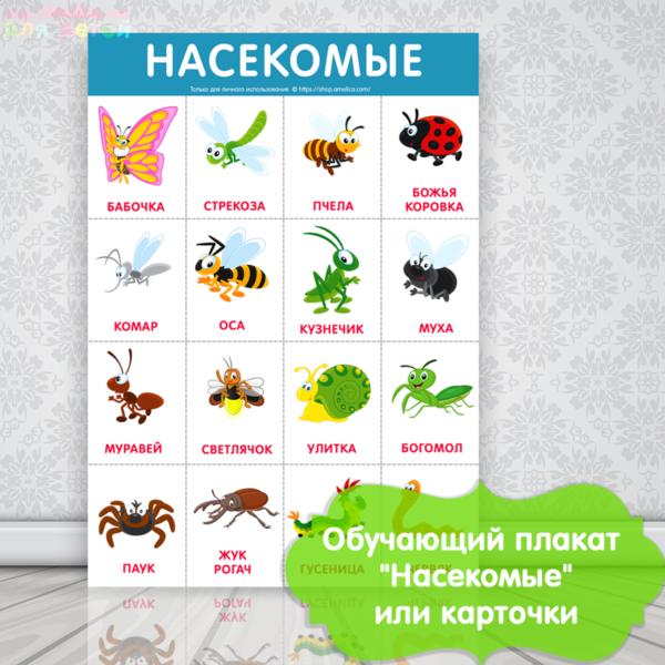 развивающий плакат для детей, плакат для детского сада, картинки насекомые для детей