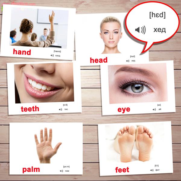 картинки части тела на английском языке, английские карточки скачать детям, карточки с транскрипцией