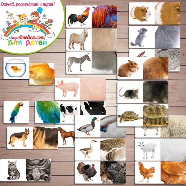 Дидактическая игра «Чья шкурка?» - Домашние животные скачать для распечатки