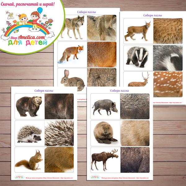 Дидактическая игра «Чья шкурка?» - Животные леса скачать для распечатки
