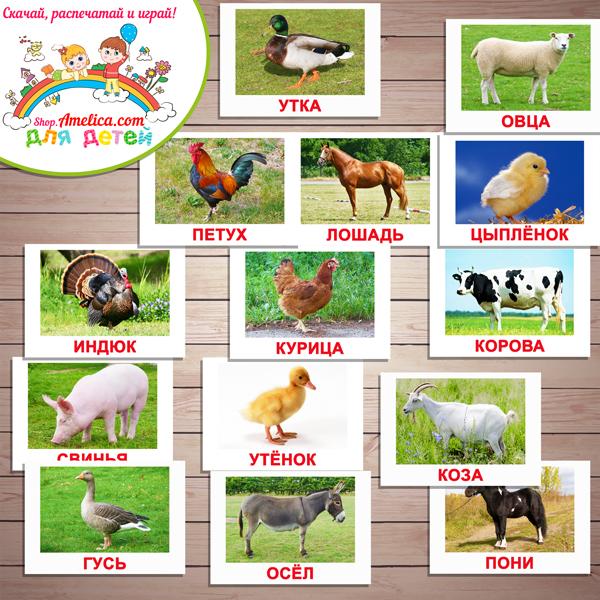 """Тематический комплект животные. Тематический комплект развивающего материала для детей """"Кто живет на ферме?"""""""