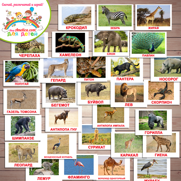 """Карточки """"Обитатели Африки"""" с названием для детей скачать, карточки Домана «Вундеркинд с пеленок»"""
