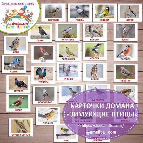 """Картинки """"Зимующие птицы"""" с названием для детей скачать, карточки Домана «Вундеркинд с пеленок»"""
