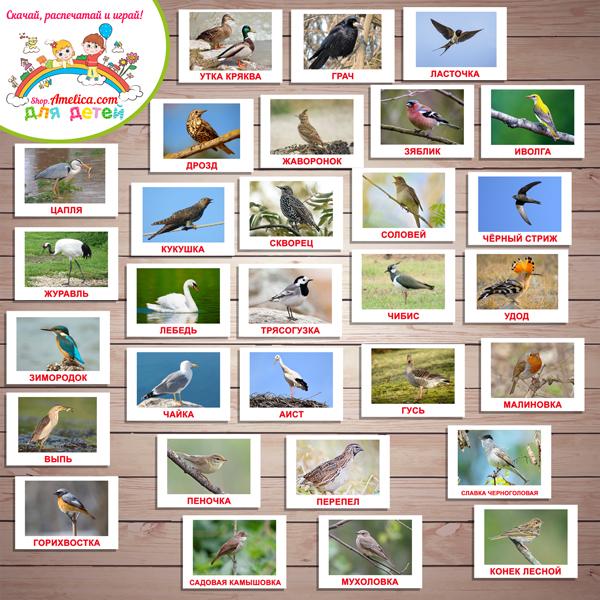 """Карточки """"Перелётные птицы"""" с названием для детей скачать, карточки Домана «Вундеркинд с пеленок»"""