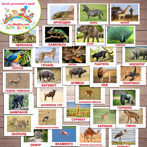 """Тематический комплект животные Африки. Тематический комплект развивающего материала для детей """"Кто живет в Африке?"""""""