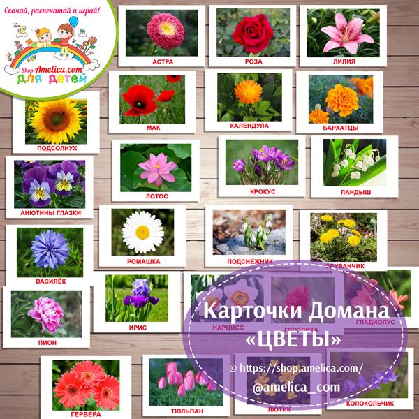 """Картинки """"Цветы"""" с названием для детей скачать, карточки Домана «Вундеркинд с пеленок»"""