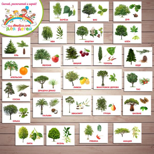 """Картинки """"Деревья, плоды и листья"""" с названием для детей скачать, карточки Домана «Вундеркинд с пеленок»"""