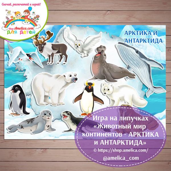 Игры на липучках для детей скачать. Дидактическая игра «Животный мир континентов - АРКТИКА И АНТАРКТИДА» распечатать